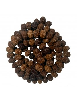 Original & Natural Eight Faced / 8 Mukhi Rudraksh Mala/Rosary Energised 108 Beads (Bead Size 16 To 16.5 MM) For Japa/Meditation